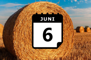 Urlaub im Juni - Vorschaubild