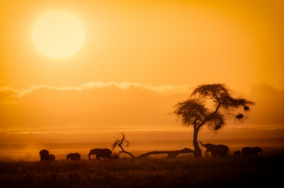 African Sunrise, Amboseli National Park (Ray in Manila)  [flickr.com]  CC BY  Infos zur Lizenz unter 'Bildquellennachweis'