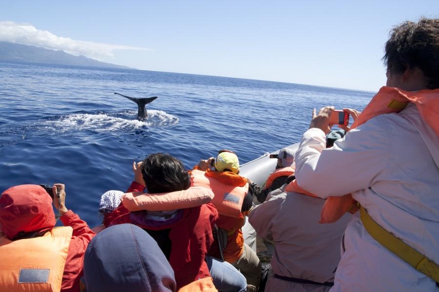Beste Reisezeit Whale Watching Vancouver Island