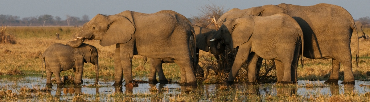 Elephants (Malcolm Macgregor)  CC BY
