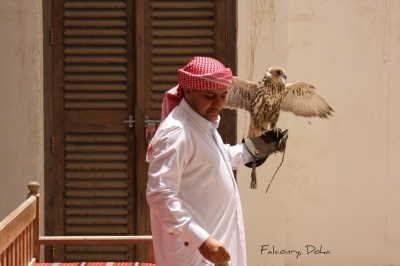Falconry, Doha, Qatar. (Jan Smith)  CC BY