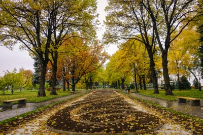 fall foliage in Moscow (Brandon)  CC BY