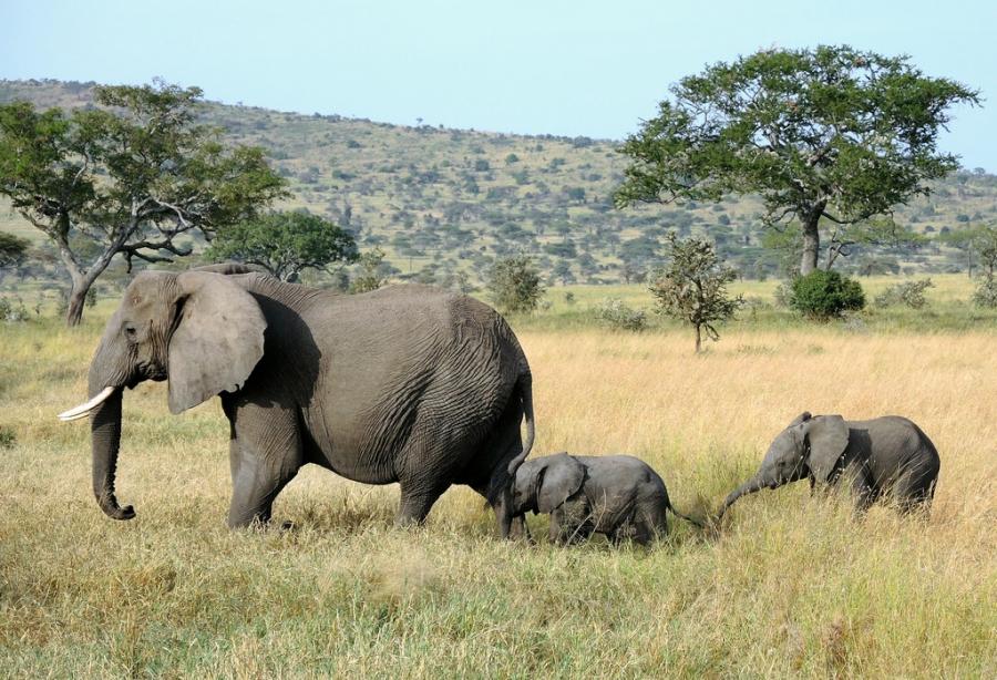 auf safari tansania bewertungen