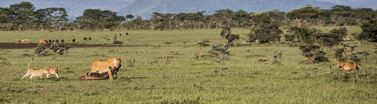 afrika safari mit badeurlaub